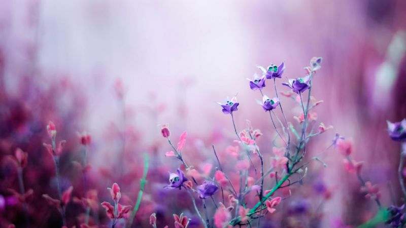 Wildflowers, 4k, HD wallpaper, purple