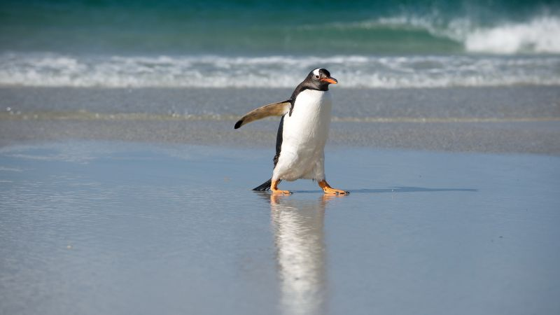 Pinguin, shore, sea, ocean, cute animals (horizontal)