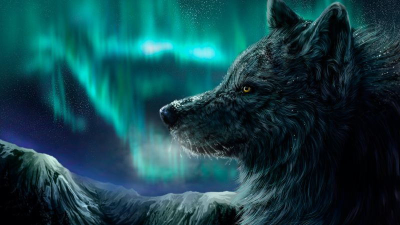 Wolf, aurora polaris, look