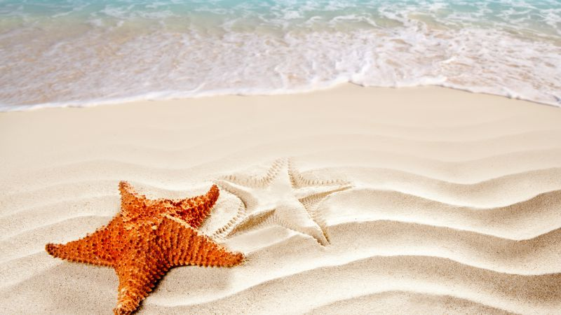 Sea, 5k, 4k wallpaper, ocean, starfish, shore, Best Beaches in the World (horizontal)
