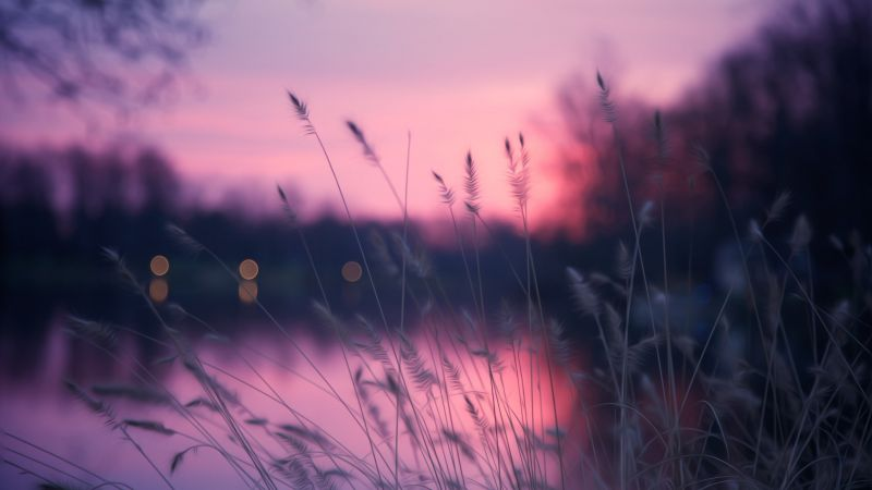 Lake, grass, sunset, purple