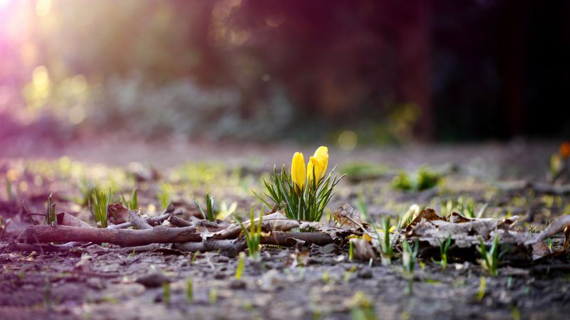 Flower, 4k, HD wallpaper, spring, forest (horizontal)
