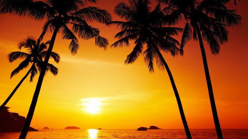 Ocean, palms, sunset