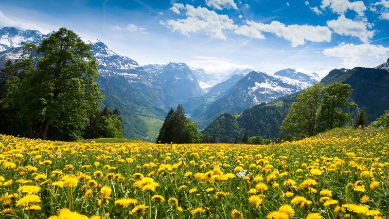 Alps, France, mountains, dandelion, meadows, sky