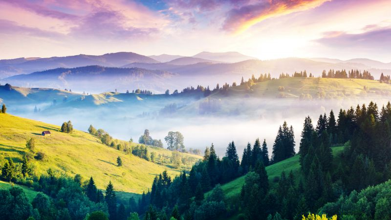 Carpathians, 5k, 4k wallpaper, pines, hills, sunset, fog (horizontal)