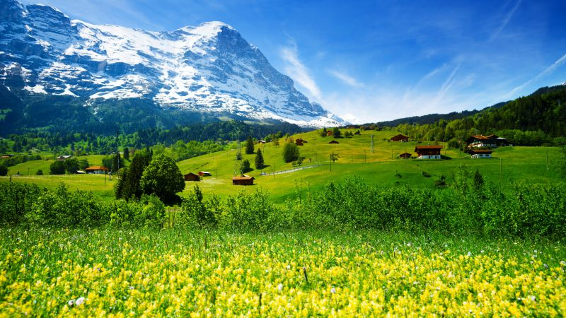 Switzerland, 5k, 4k wallpaper, mountains, meadows, wildflowers (horizontal)