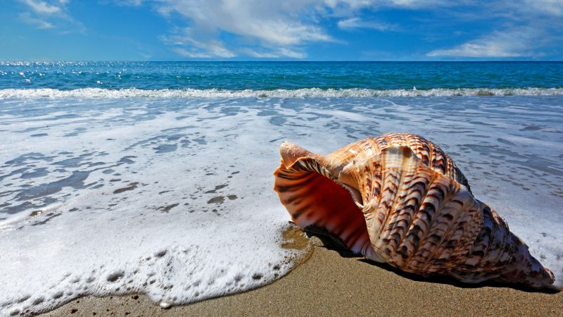 Ocean, sea, shell, sky, shore
