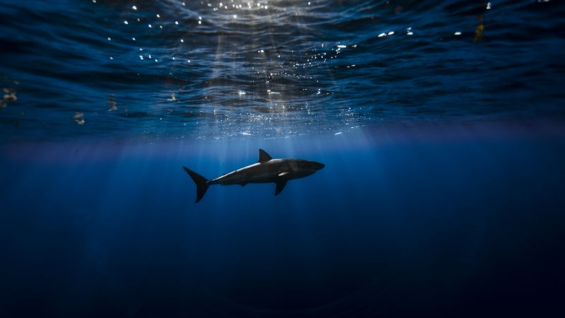 Shark, Atlantic ocean, underwater, Best Diving Sites (horizontal)