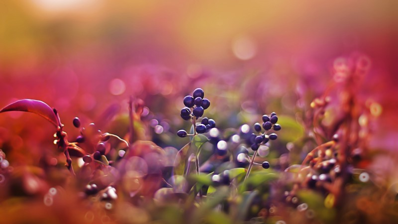 berries, 5k, 4k wallpaper, leaves, macro, bokeh, pink (horizontal)