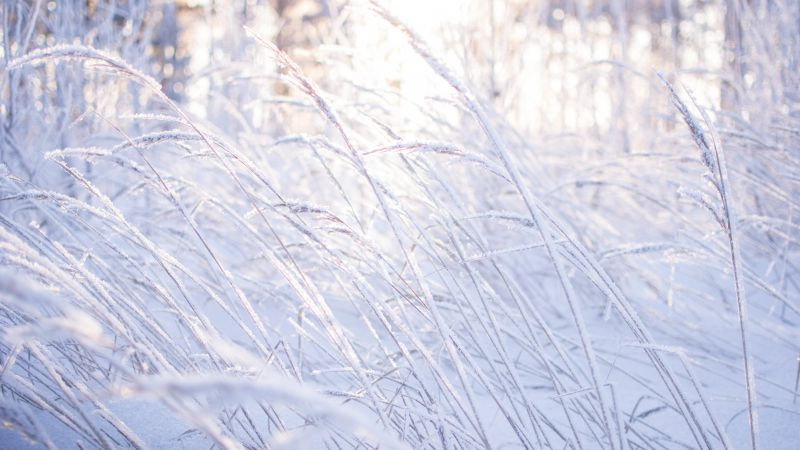 Meadows, snow, frost, grass