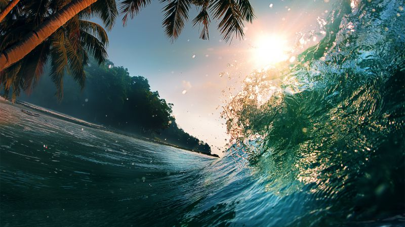 Wave, 5k, 4k wallpaper, 8k, ocean, palms, sun (horizontal)