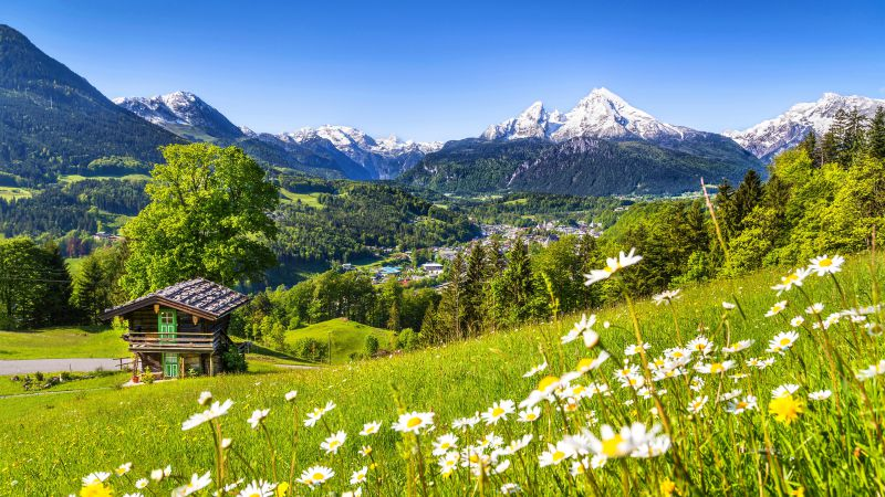 Alps, 5k, 4k wallpaper, Germany, Meadows, mountains, grass, daisies (horizontal)