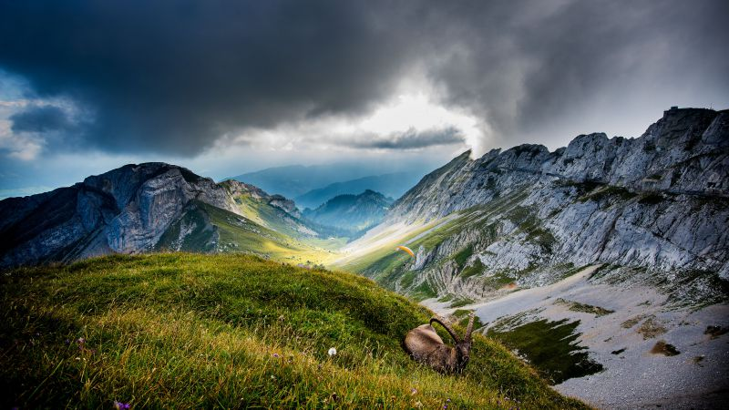 Mount Pilatus, 5k, 4k wallpaper, Switzerland, Mountains, meadows, goat, clouds (horizontal)