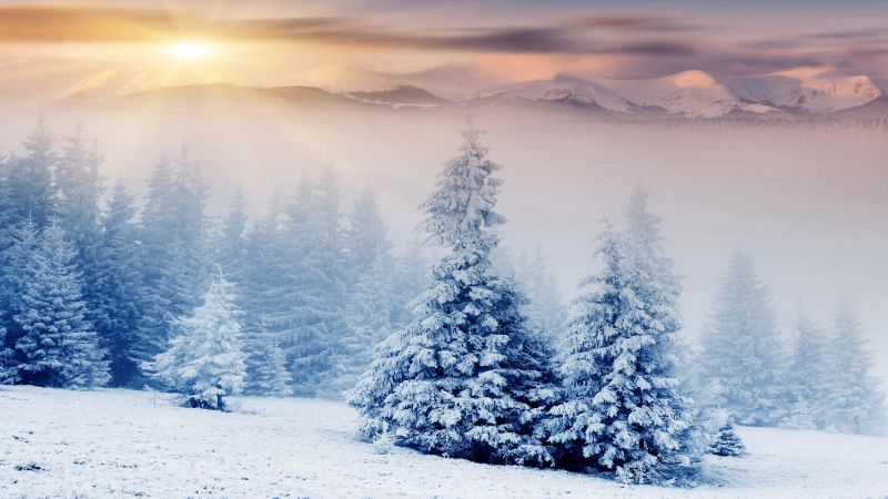 Trees, pines, mountains, snow, winter, sunset