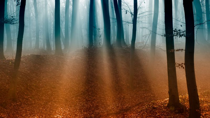 Forest, 4k, 5k wallpaper, trees, sunlight, fog, autumn