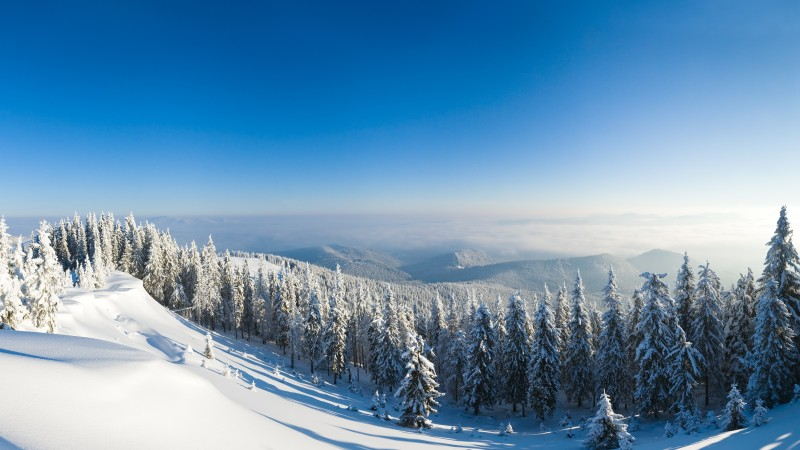 winter forest, mountain, sun, snow, fir-trees