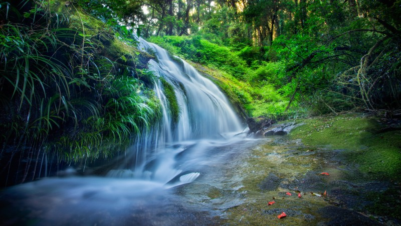 forest, 5k, 4k wallpaper, 8k, rocks trees, plants, waterfall, river (horizontal)