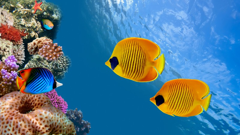 Fish, diving, tourism, Cocos Island, Costa Rica, Magnetic Island, Australia, Ambergris Caye, World's best diving sites