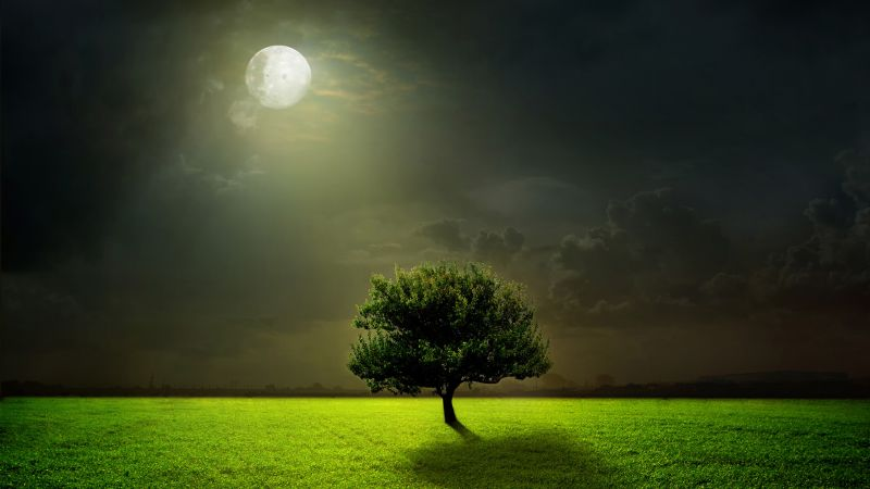 Meadows, 5k, 4k wallpaper, moon, trees, night (horizontal)