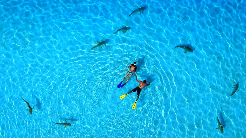 French Polynesia, 5k, 4k wallpaper, vacation, rest, travel, booking, ocean, diving with sharks, World's best diving sites (horizontal)