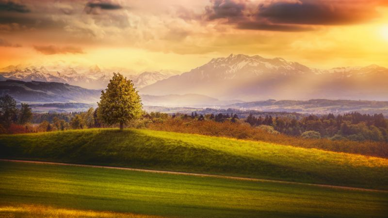 Switzerland, Alps, mountains, meadows, trees