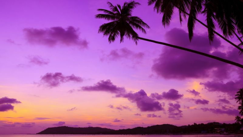Thailand, 4k, 5k wallpaper, beach, palms, shore, sunset, travel, tourism (horizontal)