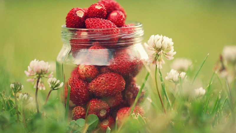 strawberries, greens, flowers, bokeh, dandelions,  (horizontal)