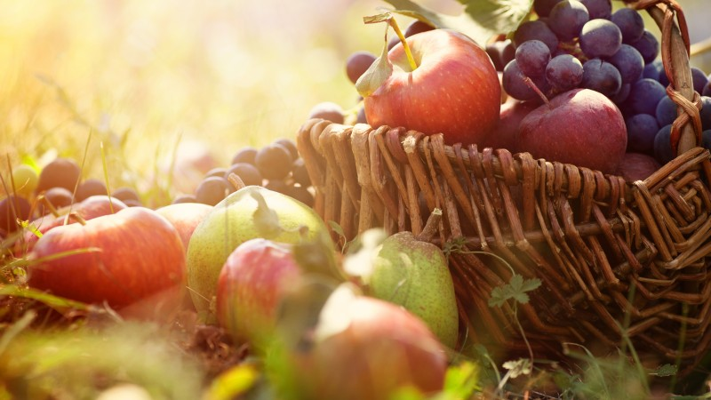 basket, grapes, apples, pears, greens, sun