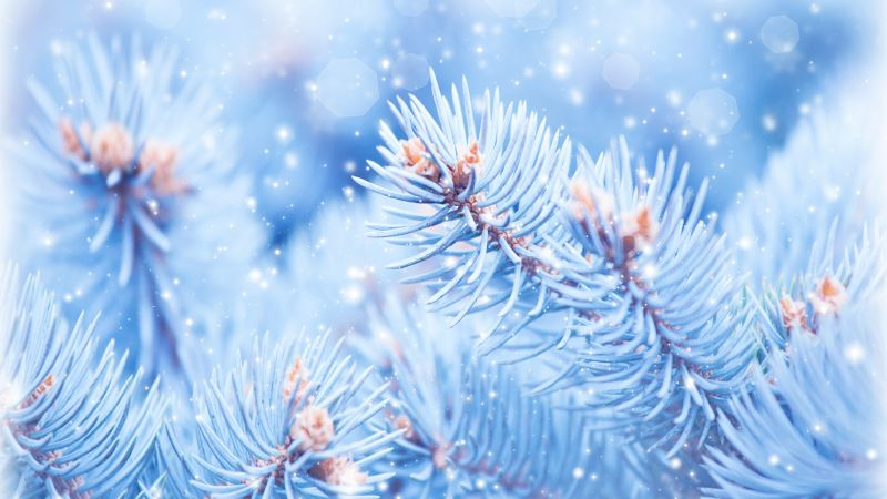 Fir-tree, 5k, 4k wallpaper, Christmas, winter, blue (horizontal)