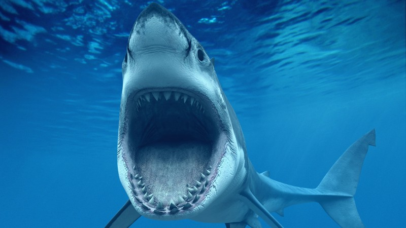 White Shark, Caribbean, Aruba, tourism, diving, sharks, jaws, underwater, blue water, World's best diving sites