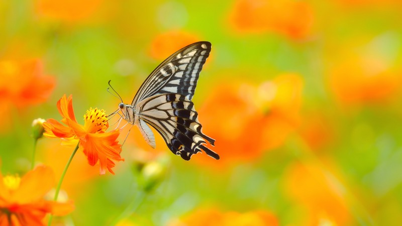 butterfly, 5k, 4k wallpaper, colorful, flowers, yellow, insects (horizontal)