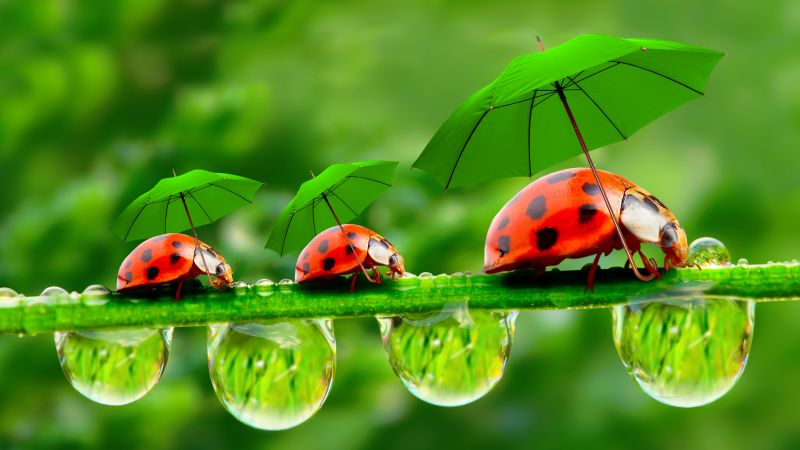 ladybug, red, green, grass, Umbrella