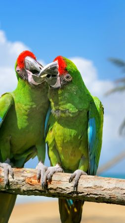 parrot, plumage, branch, exotic birds, green