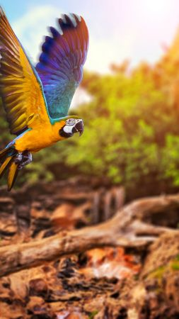 flying parrot, yellow, blue