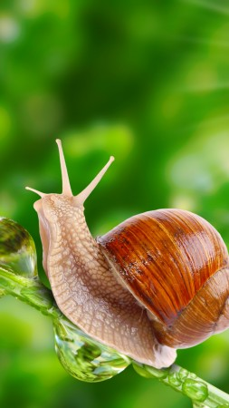 snail, nature, sunshine (vertical)