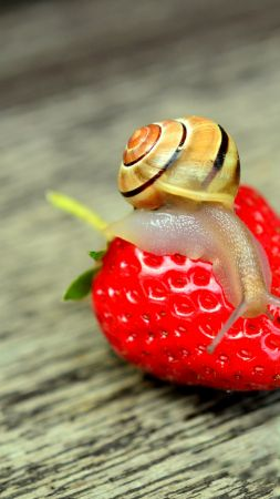 snail, nature, strawberry (vertical)