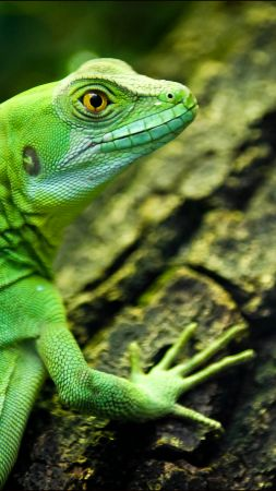 lizard, close-up, green, eyes, reptilies (vertical)
