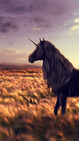unicorn, horse, nature, black