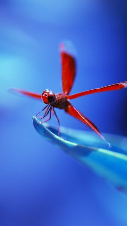 dragonfly, insects, blue (vertical)