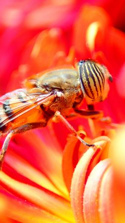 bee, flower, red, insects (vertical)