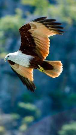 eagle, flight, wingspan, wings, bird, look, nature, animal (vertical)