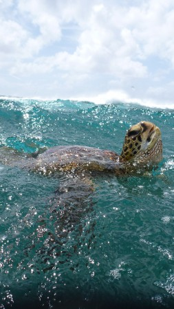 Turtle, surfing, water, sea, ocean, underwater, animal, sky, clouds, Malaysia, World's best diving sites
