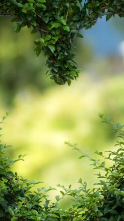 heart, 4k, HD wallpaper, green, leaves, bush (vertical)
