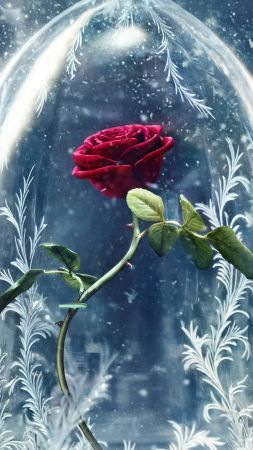 Beauty and the Beast, rose, red, best movies (vertical)