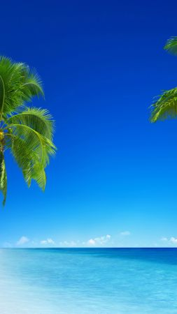 tropical beach, 5k, 4k wallpaper, 8k, paradise, palms, sea, blue (vertical)