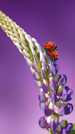 ladybird, 5k, 4k wallpaper, 8k, flowers, summer (vertical)