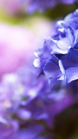Beautiful flowers, 5k, 4k wallpaper, blue, spring, macro (vertical)