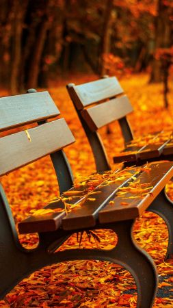 autumn park, 5k, 4k wallpaper, trees, leaves, bench (vertical)