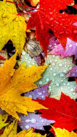 Leaves, 5k, 4k wallpaper, drops, rain, autumn (vertical)