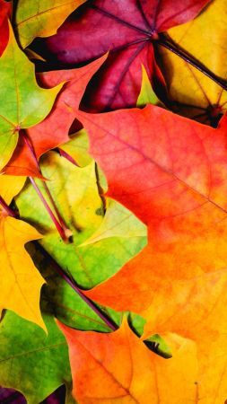 Leaves, 5k, 4k wallpaper, 8k, colorful, autumn (vertical)